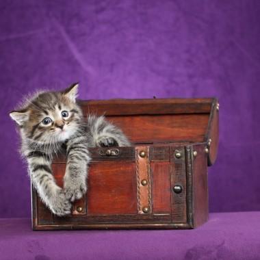 Kitten #5