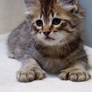 Kitten #4