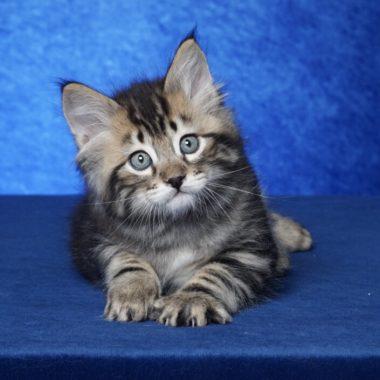 Kitten #1