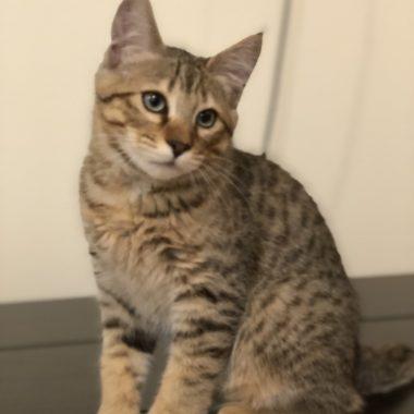 Kitten #2