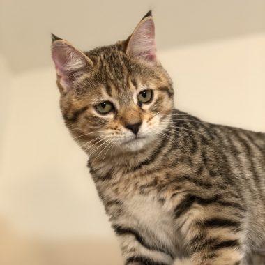 Kitten #6
