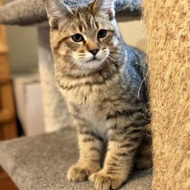 Kitten #3